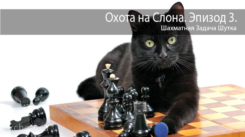 Шахматная Задача Шутка
