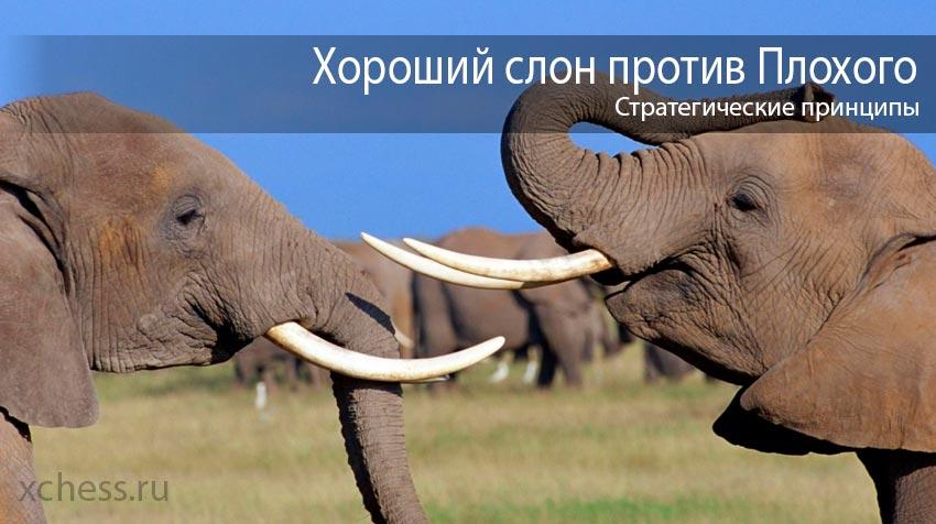 Хороший слон против плохого