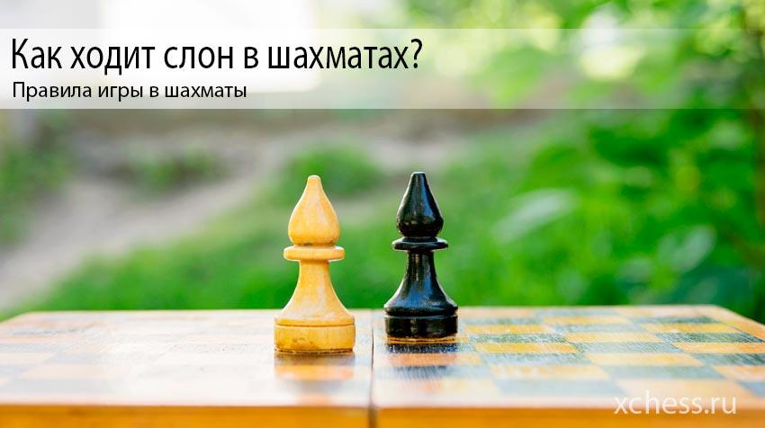 Как ходит слон в шахматах?